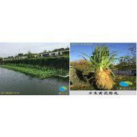 怎么去选择水生植物厂家呢