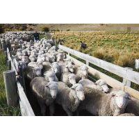 饲料厂自配羊饲料,羊饲料供应商家(羊混合饲料)