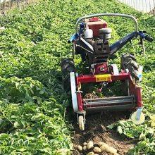 湖南刨红薯机 小型地瓜收获机 圣鲁马铃薯收获机