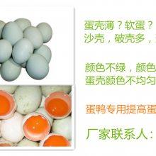 鸭子产畸形蛋、花纹蛋砂皮蛋怎么办