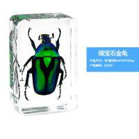 精美昆虫琥珀书镇 创意礼品透明树脂工艺品人工琥珀昆虫标本包埋