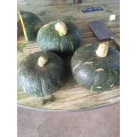 甜美香栗南瓜种子 板栗类型南瓜种子