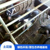 湖南宁乡土花猪放心食用野猪肉土花猪宝宝精排瘦肉厂家直销