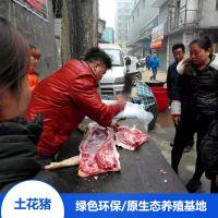 哪里买野猪肉 湖南 宁乡土花猪肉 花猪宝宝 野生滋味 野猪肉 绿色食品