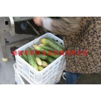 供应萝卜气泡清洗机 根茎类高压水清洗机诸城利特食品机械