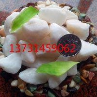 德天供应水磨石红石子 五彩石 透水胶粘石任何形式加工 雨花石 白黑黄蓝绿粉灰色