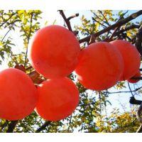 陕西临潼火晶柿子 皮薄无核 新鲜水果 产地直供 一件代发 6斤包邮