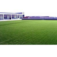 人造仿真草坪人工塑料假草皮草坪幼儿园高尔夫球场草坪批发