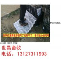 沧州弘昌养猪设备厂2.1*3.6连体保育床 高培仔猪保育栏畜牧养殖