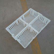 塑料鸡苗筐 小鸡运输筐 运雏鸡箱批发