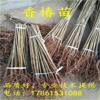http://himg.china.cn/1/4_134_237424_800_800.jpg