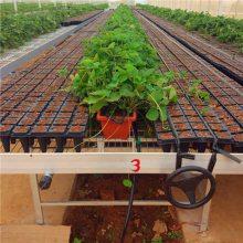 长期供应 优质 花架网 电焊网活动苗床 汉明育苗设备厂