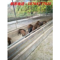 http://himg.china.cn/1/4_138_235240_500_666.jpg