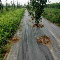 广西果园园艺防草布供应厂家质量好