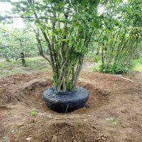土球保护网,安平县土球保护网厂,包土团树根网