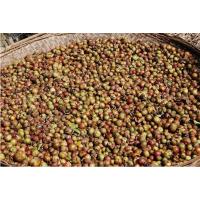 油茶籽烘干机价格_ 供应热销油茶籽热泵烘干机