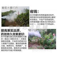 志成畅销园林花木烟雾机蔬菜园地弥雾机大棚中植物病虫害防治