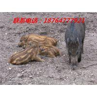 http://himg.china.cn/1/4_143_235104_500_374.jpg