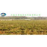 南阳猕猴桃采摘,河南水源地农业科技有限公司1000亩标准化猕猴桃有机种植基地欢迎您