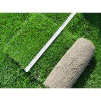 哪里卖草坪 绿化用的草坪哪里便宜 江苏草皮基地有大量现货