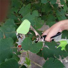 攀爬植物葡萄架子固定机 阳台园艺果蔬育苗绑枝机