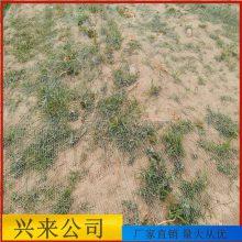 南通防尘网 工地盖土网每平米成本 煤场防尘网材料