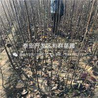 http://himg.china.cn/1/4_147_238232_750_750.jpg