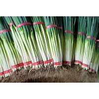 栽培小葱,辽宁恒辉新能源提示两个技术要点