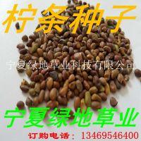 批发林木【柠条种子】锦鸡儿 绿化灌木抗旱种子量大从优
