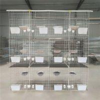 鸽子养殖笼 养鸽子用品 12位肉鸽养殖笼找河北利港丝网