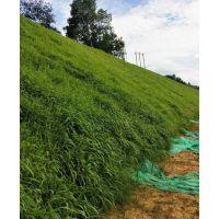 重庆高速公路护坡绿化草籽灌木种子混播比配及效果