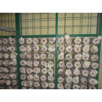 温室蘑菇网片出蘑网片出菇房网片出菇房铁丝网格图片价格