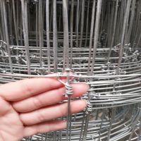 销售镀锌铁丝圈鹿网厂家,牧场圈鹿铁丝网,圈鹿围网