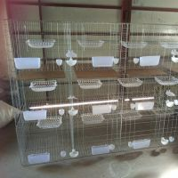直销大型养殖场联排镀锌钢丝肉鸽鸽子笼具