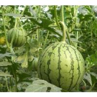 瓜果蔬菜专用水溶肥旺根膨果钾宝 高钾高钙水溶肥