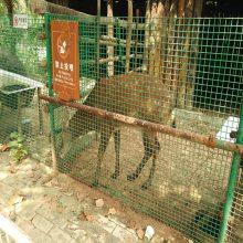养殖护栏网 铁丝围栏网 浸塑防护网