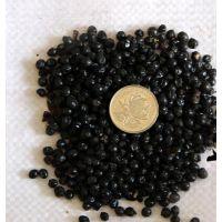 安徽射干种籽批发 自产射干种苗种,培育种苗