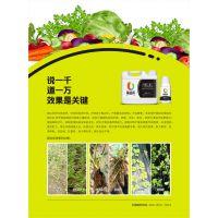 蔬菜基地专用药肥无激素辣椒草莓专业冲施增产增收河南科邦生产
