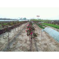 青州市圣格花卉苗木专业合作社