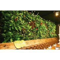 长沙会所植物墙制作施工设计