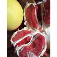 哪里有红肉蜜柚苗批发|福建红心蜜柚苗都卖什么价格|柚子苗木