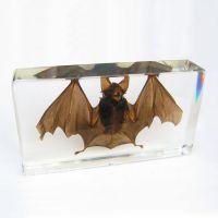 蝙蝠标本动物教学标本琥珀书镇透明树脂包埋昆虫人造琥珀创意礼品