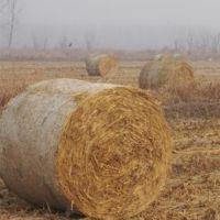 瑞祥厂家直销牧草秸秆打捆网,捆草网 聚乙烯打包网