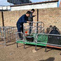 海宇畜牧定制全套养猪设备 2.1米*3.6米双体母猪产床