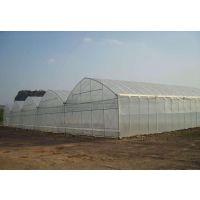 海南生态农业观光大棚观光温室连栋、塑料膜型项目报价