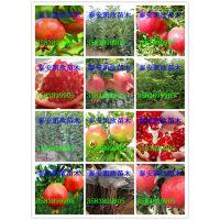 泰山红石榴苗多少钱一颗 泰山红石榴苗特点适应性强耐旱