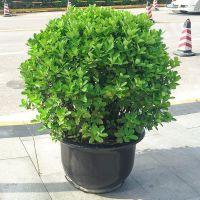 武汉绿化公司苗木批发绿化施工,武汉园林公司苗木养护