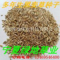 批发牧草种子 多年生黑麦草种子 量大从优 优质饲料 新货