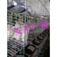 生产标准兔笼 兔子笼 兔笼子 兔子笼子 3层9位12位24位商品笼 肉兔笼 子母兔笼