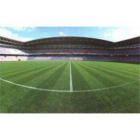 足球场人造草坪|足球场人造草坪设计施工